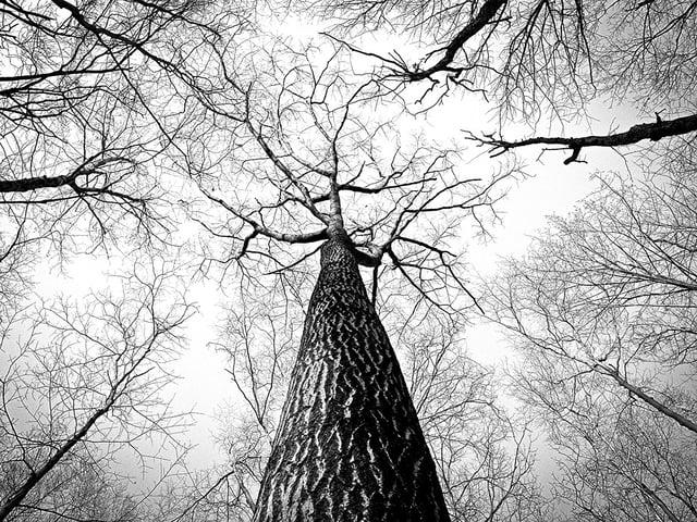 branches-238379_960_720.jpg